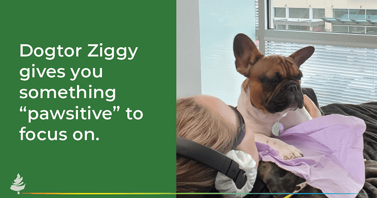 """Dogtor Ziggy gives you something """"pawsitive"""" to focus on."""