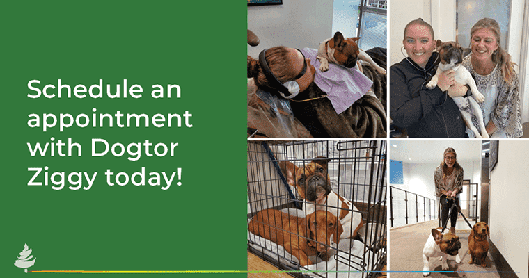 Schedule and appointment with Dogtor Ziggy today!