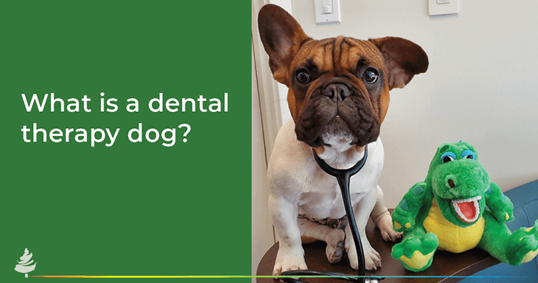 What is a dental therapy dog?
